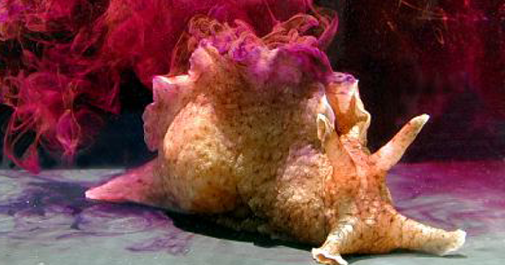 Why Study Sea Snail Brains?